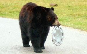 bear-hubcap-460_793498c